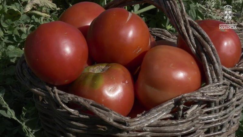 Tomates de la huerta de Herencia